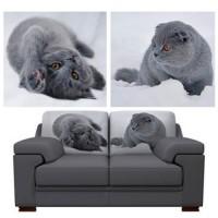 kittens +1500 р.
